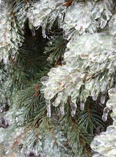 Dec/13 Ice Storm Toronto Canada Ice Storm, Winter Wonder, Toronto Canada, Cosmos, Closer, Christmas Wreaths, Weather, Sky, Holiday Decor