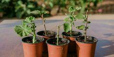 6 μυστικά για φροντίδα καμέλιας   Τα Μυστικά του Κήπου Planter Pots, Home And Garden, Backyard, Layout, Patio, Page Layout, Backyards