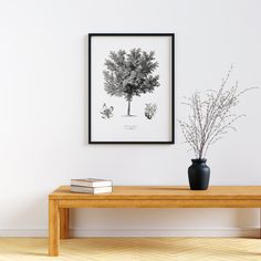 Minimalist Black and White Botanical Art Printable Wall Art of The Common Peach Tree #botanical #download #christmasgift #homedecor #peachtree #vintagedrawing Botanical Art, Botanical Illustration, Peach Trees, Vintage Drawing, Frame It, Frame Sizes, Floating Nightstand, Printable Wall Art, Christmas Gifts