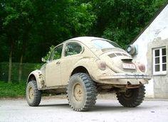 Muddy Beetle