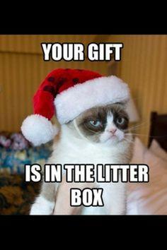 grumpy cats christmas compilation 20 pics grumpy cat humor cat memes gato - Dirty Christmas Memes