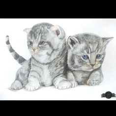 Been spendin our lives livin' in a kitty paradise!!!  Furry Paw Silver ready to be framed and shipped!! www.furrypawpics.com