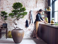 Bonsai trees are an exceptional option for an unusual office plant. If you are a newcomer to Bonsai, a club is a superb chance to learn some fantastic abilities and meet new pals. Bonsai Ficus, Indoor Bonsai, Indoor Plants, Ficus Tree Indoor, Bonsai Trees, Indoor Gardening, Ficus Microcarpa, Potted Trees, Trees To Plant