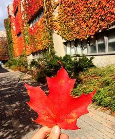 by community member ! York University, School Photography, Falling Leaves, Autumn Leaves, Toronto, Community, Instagram Posts, Fall Leaves, Autumn Leaf Color