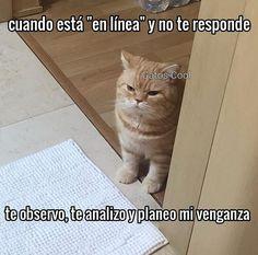 "Gatos Cool en Instagram: ""😾 . . . . #memesdegatoscool #gatoscool😸 #gatos_cool #venganza #revenge #dulcevenganza #cosasdenovios"""