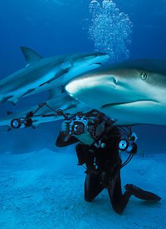 Sharks always fascinate me.....