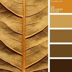 color scale of autumn leaves warm shades of brown caramel color with orange brown accent this color solution is suitable for the decoration of working