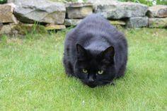 Hamish ♡ black cat