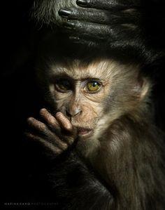 ik hou van de apen..