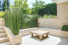 Die 27 besten Bilder von Pflanzen / Sichtschutz in 2019 | Garten ...
