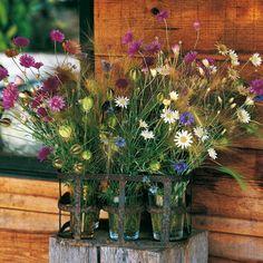 photo 100ideesdeco.com bouquet de bleuets dans un casier