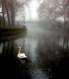 Beauty in the fog Trikala , Greece Smell Of Rain, Magic Forest, Yellow Leaves, Animal Totems, Greece Travel, Love Birds, Rose, The Dreamers, The Good Place