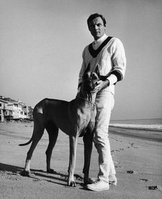Adam West (actor, Batman) and his dog Batdog. Adam West is standing on a beach and holding his dogs head; Batdog is a Great Dane (probably) with pointy bat-like ears. Adam West Batman, Robin, Bat Dog, Famous Dogs, Famous People, Crime, The Blues Brothers, Great Dane Dogs, Purebred Dogs