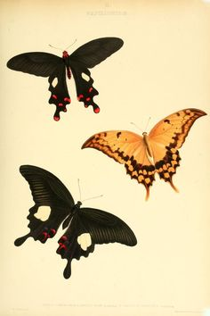 1846-50 -  The genera of diurnal lepidoptera : comprising their generic characters, a notice of their habits and transformations, and a catalogue of the species of each genus by Doubleday, Edward, 1811-1849