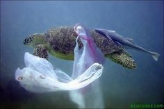 Horrorosa destrucción oceánica - Ecocosas