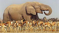 BBC #Africa In pictures: Kalahari
