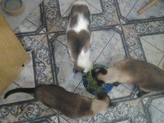 Ownnnn cats :-)