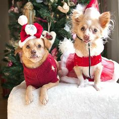 This Christmas, not only did I get to spend it with my human family and @underbiteunite, I'm so lucky to be able to celebrate today with all of you ー my Instagram family. Happy holidays to each and every one of you. With so much love, Pixie & Marie