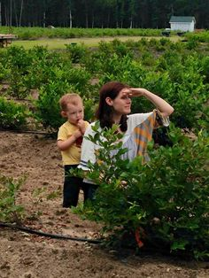 Parents love bringing their kids to DiMeo Blueberry Farms to pick out the perfect blueberry bushes for sale so they can grow blueberries at home in their own little blueberry patch like this happy DiMeo customer. Call: (609) 561-5905 to get a quote or to ask questions. We appreciate your business.