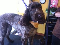 Full-service pet grooming in Colorado Springs offered by five-star pet groomer The Phur Seasons Pet Spa & Boutique