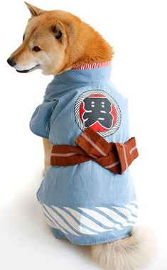 Dog Clothing 10 Kawaii Dogs in Kimonos: Shiba Inu Kimono from Puppy-Clothes - Ohaiyo! Cats in sweaters are cute, but puppies in traditional Japanese attire are kawaii. Chien Shiba Inu, I Love Dogs, Cute Dogs, Puppy Clothes, Dogs In Clothes, Dog Clothing, Funny Animals, Cute Animals, Japanese Dogs
