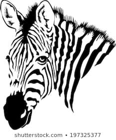Find Vector Illustration Abstract Zebra On White stock images in HD and millions of other royalty-free stock photos, illustrations and vectors in the Shutterstock collection. Thousands of new, high-quality pictures added every day. Zebra Kunst, Zebra Art, Zebra Drawing, Horse Stencil, Easy Canvas Art, Buddha Painting, White Stock Image, Animal Drawings, Animal Illustrations