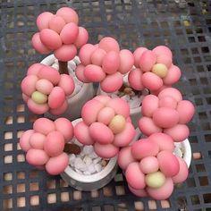 Strawberry Menthos???!! Yummy!  @airportll