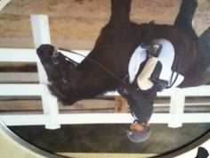 This was me on a pony named hershey when I was like 5