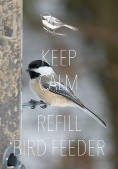 keep calm and refill bird feeder / created with Keep Calm and Carry On for iOS #keepcalm #chickadee