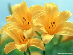 I love these cute yellow flowers
