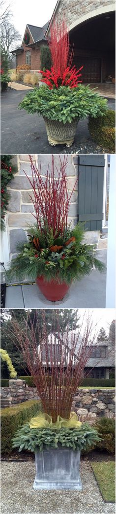 18 Winter Container Garden Ideas