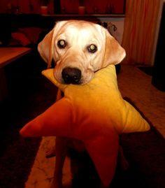 Labrador Retriever Kessy  Kommt einer mit zum Kuscheln?       Mehr lesen: http://d2l.in/65  dogs2love - Gassi gehen zum Verlieben. Partnerbörse für alle, die Hunde lieben.  Bild, Dating, Foto, Hund, Single