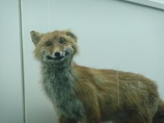 Bad Taxidermy, Beijing Natural History Museum