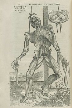 Compiled of highly detailed engravings and using the newly acquired technology of the printing press, the medical 'truth' of our internal world was able to spread further afield, throughout intellectual communities  and beyond. Vesalius displayed all the parts of the bodyin their entirety, the nervous and vascular systems and every bone in the body. His cadavers were robbed from graves and criminals, released by a judge who  was interested by vesalius' work.