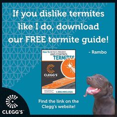 To download our FREE TERMITE GUIDE you can find the link under the TERMITE SOLUTIONS drop down menu on Clegg's.com.  #pestcontrolservice #pestcontrol #pest #bugs #insects #bedbugs #bedbugdog #dogs #dogslife #dogstagram #dogsofinstagram #dogsrule #follow #instagood #instafollow #awesome #love #happy #smile #fun #cool #northcarolina #northcarolinaliving #carolinas #dogmom #doglover #labrador #labsofinstagram #carolinamom #termites