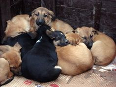 How Much Is That Doggie On My Browser? - Many puppy mill puppies live in cramped and filthy cages and suffer from starvation and serious illnesses.    Posted 11th December 2012