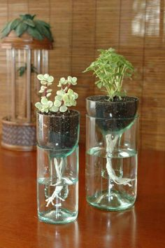 Cool-Wine-Bottles-Craft-Ideas what a GREAT idea! Using both halves of the bottle for a self watering planter 26 Cool Indoor Water Garden Ideas For Best Indoor Garden Solution - Page 15 of 18 Don't toss those old wine bottles; Old Wine Bottles, Recycled Glass Bottles, Glass Bottle Crafts, Wine Bottle Art, Diy Bottle, Wine Bottle Planter, Recycle Bottles, Wine Bottle Glasses, Diy With Glass Bottles