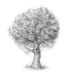 Tree Drawing Drawing Skill tree drawing - Drawing Tips Drawing Tips, Drawing Skills, Drawing Drawing, Pencil Drawings Of Girls, Face Sketch, Old Trees, Lip Pencil, Face Art, Moose Art