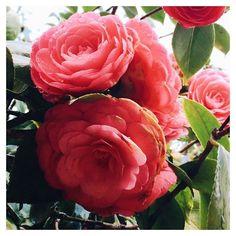 Flowers, flowers, flowers..🌺🌺 @bdcbleblog