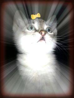 Cami Beautiful foster kitten.