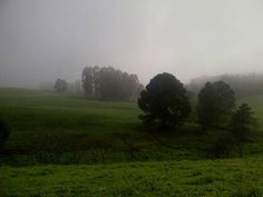 Fog Plant Tree Tranquility Tranquil Scene Environment Landscape Beauty In Nature Grass Land Scenics - Nature Field Sky Nature Non-urban Scene Green Color No People Day Growth Outdoors Hazy Royalty Free Pictures, Trees To Plant, Green Colors, Grass, Environment, Country Roads, Scene, Outdoors, Sky