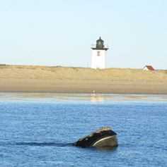 Provincetown Center for Coastal Studies | Marine Education | Field ...