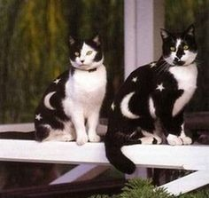 how did they get those cats to sit still for that ?