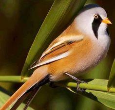 Bird via Paradise of Birds on Facebook
