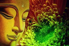 """""""Do not dwell in the past, do not dream of the future, concentrate the mind on the present moment."""" Buddha"""