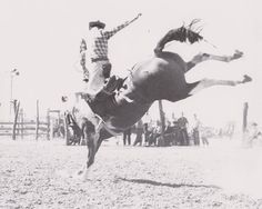 "Dick Fairchild on Ekalaka, at the ""Days of 85 Rodeo"".  Feek Tooke purchased this big 1600 lb black and white paint from Ben Castleberry in 1950.  It turned out to be a really rank saddle bronc."