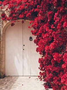 MALTA DOORS Fauna and Flora are two terms frequently heard by people who spend time in nature. Ed Wallpaper, Natur Wallpaper, Flower Wallpaper, Wallpaper Backgrounds, Pretty Backgrounds, Flower Backgrounds, Flower Aesthetic, Red Aesthetic, Aesthetic Pictures