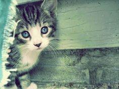 Se um gato pudesse falar, eles não o fariam.  Nan Porter