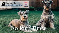 No Ruff Times. | Tuscawilla Animal Hospital has veterinarians that care about cats and dogs too! Call us today to schedule an appointment. #veterinarymedicine #animalhospital Veterinary Medicine, Veterinarians, Schedule, Dog Cat, Times, Cats, Animals, Timeline, Gatos
