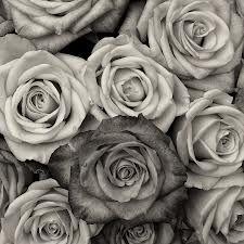 blanding av roser
